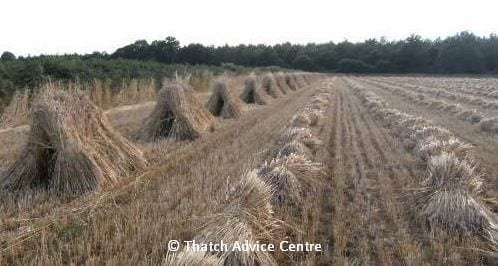 Thatching Straw harvest 2020/2021