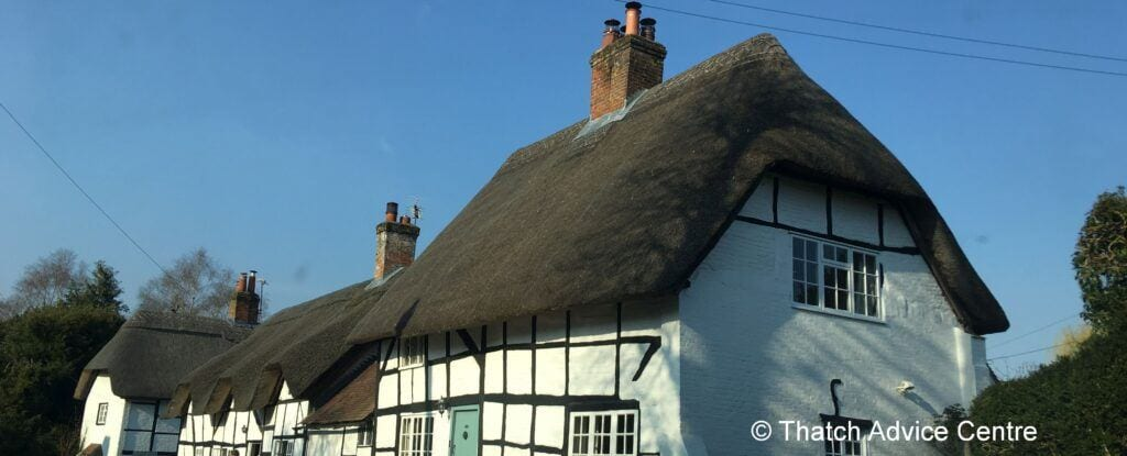 Thatch and Level Three Survey